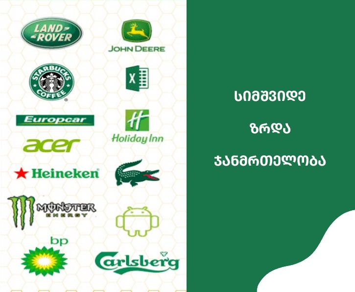 საიტი,საიტის დამზადება,მწვანე,ბრენდინგი,მობილური აპლიკაციის დამზადება,websaitis damzadeba,mobile app,branding,logo